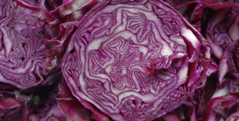 Как правильно сохранить урожай краснокочанной капусты до весны?