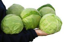 Описание сорта белокочанной капусты Июньская