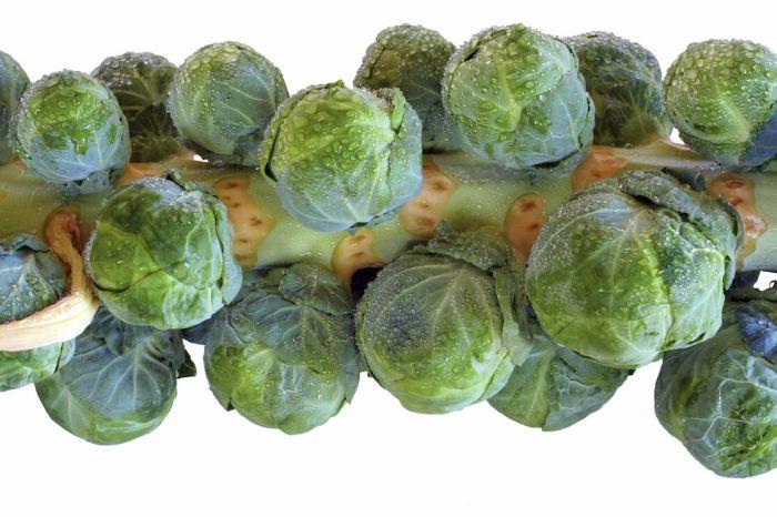 холодностойкие сорта брюсельской капусты