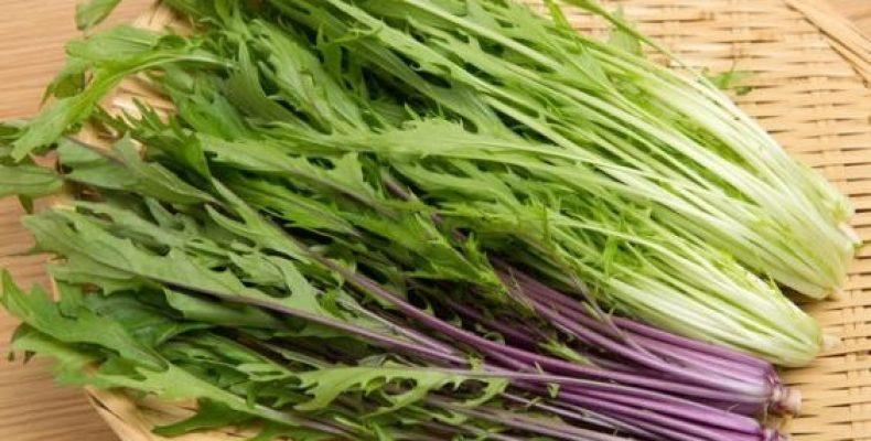 Польза и выращивание капусты мизуна