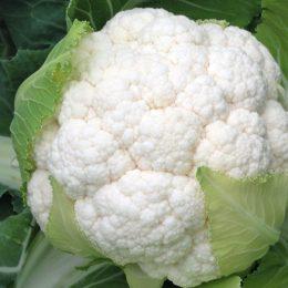 Чем полезна цветная капуста: описание, выращивание, рецепты