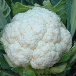 Среднеранний сорт цветной капусты Сноуболл 123